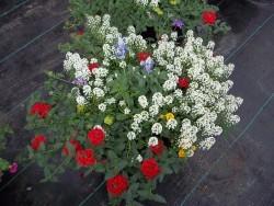 Combination Planter