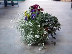 Fall Combo Planter