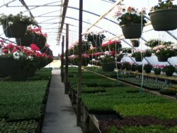 Spring in the Greenhouse